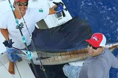 Sailfish being boated in the bay from Los Arcos to La Cruz!