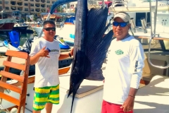 11 27 2017 Sailfish in Bay, 6 hrs, Magnifico 600 pxls MBText