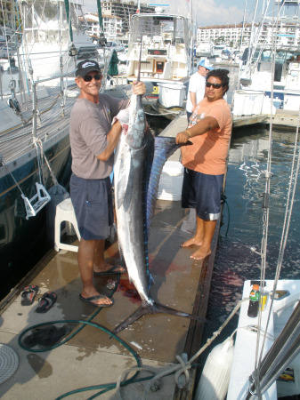 First Striped Marlin of the Season, winter is coming now!