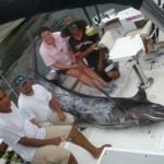 Black Marlin... 375lbs... this is a big fish, but they get a lot bigger