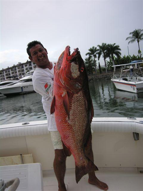 Capt Cesar again off Zig Zag with one monster Cubera Snapper!