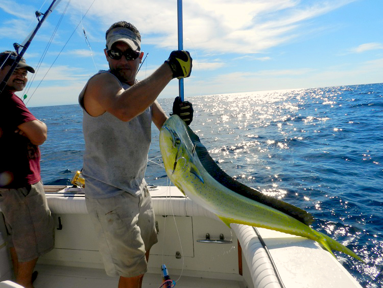 Dorado at the Gaff at the Marietta Islands, this is our first mate Lobo.... Nice Dorado  as well... www.masterbaiters.com.mx