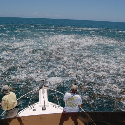 how to catch skipjack in winter