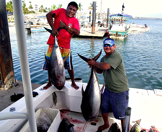10 22 2013 Yellowfin Tuna 85 lbs enhanced 500 pxls sin text
