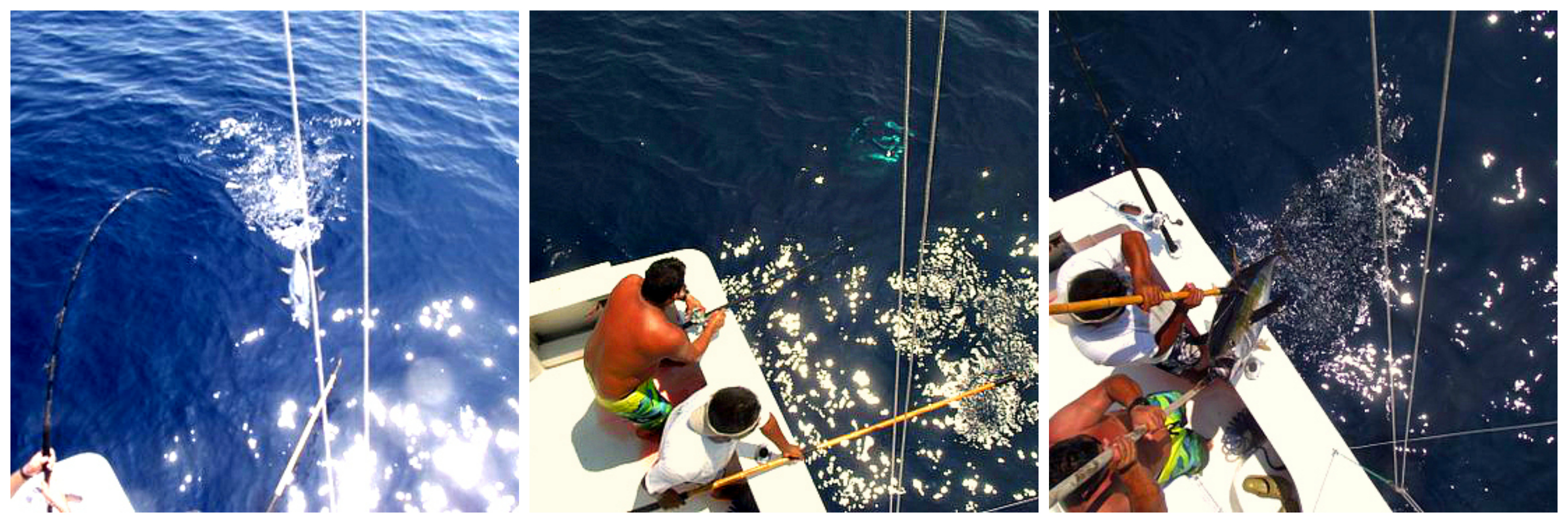 05 29 2015  Andelé Yellowfin El Banco at the gaff  Colage