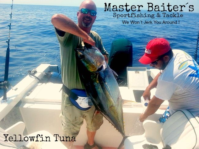 Just a Baby Yellowfin Tuna, they kept him just the same. . . .
