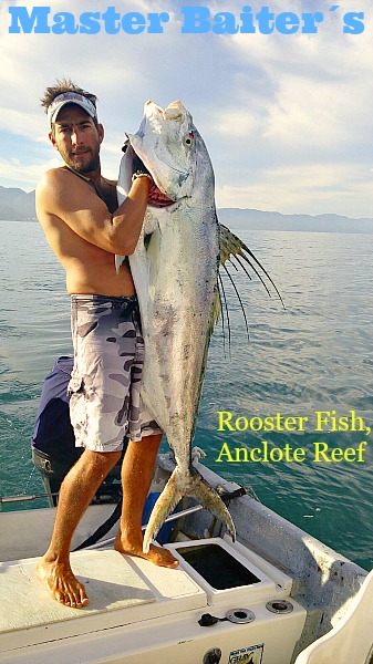75 lb Rooster Fish caught in Sayulita off the Anclote Reef area