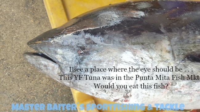 Where is the eye on this Yellowfin Tuna which is for sale in one of the Punta Mita Fish Markets?? Is it deformed, sick, poisoned ?