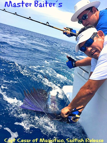 Capt. Cesar Releasing a Sailfish of Punta Mita Point
