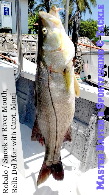 Now that the rains have started Snook (or Robalo in Spanish) are hanging out in front of the several River Mouths where they feed on twigs, leaves, roots, berries, who know´s what, but it´s a white meat fish that will get up to 45 lbs if you get a big one!