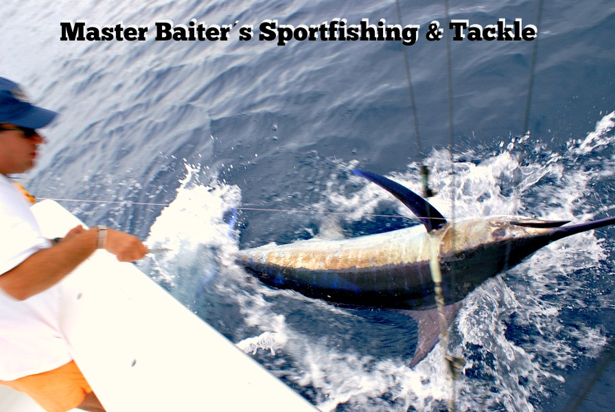 Still some nice sized Marlin at Corbeteña, but the fish are spread out, not concentrated around the ¨Rock¨