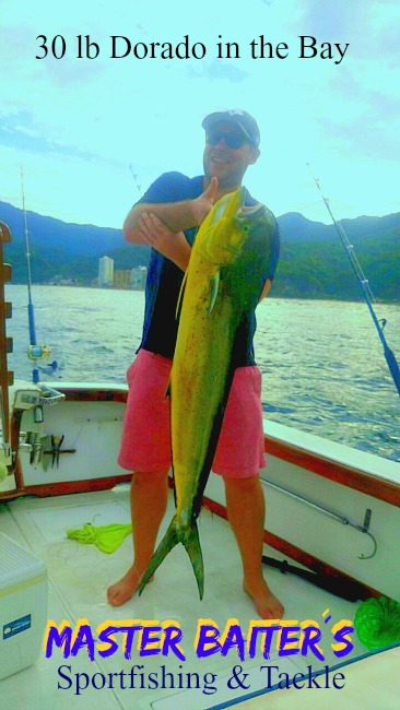 Large Dorado in the bay last week!