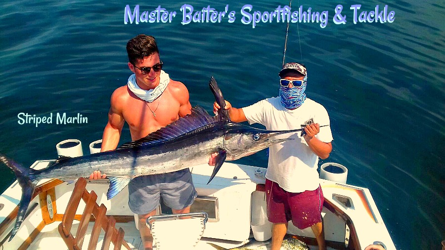 Striped Marlin Boated at El Morro on Magnifico