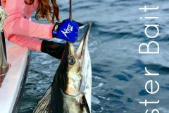 Striped Marlin are still in the bay and is your best bang for your fishing dollar!