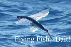 08 16 2018 Flying Fish