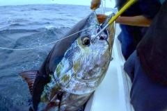 09 010 2018 Yellowfin Tuna at the Tres Marias 650 pxls MBText