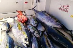 09 07 2018 Bay Fishing, Bay fishing MBText