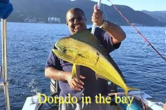 09 08 2018 Dorado in the bay, 400 pxls MBText