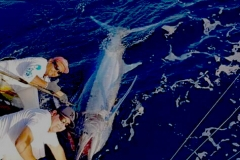 11 04 2018 Marlin hookup Tournament, Marcos Taymayo, orig 5a Animal House 700 pxls MBText