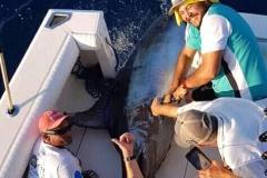 11 04 2018 Marlin hookup Tournament, Marcos Taymayo, orig 5b Animal House