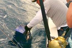 12 27 2017 Profetta Released sailfish 650 pxls MBText